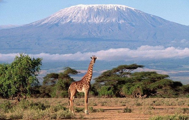 kilimanjaro-620x395